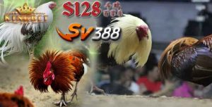 Bandar S128 Online