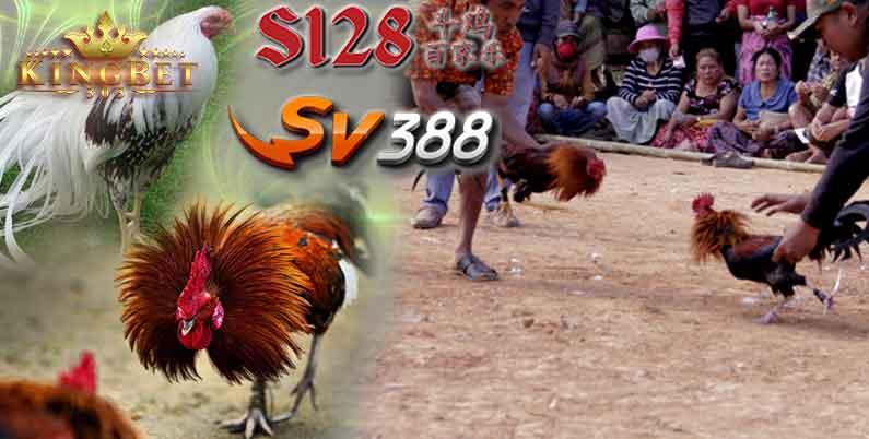 Sabung S1288 Ayam