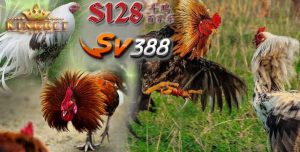Situs S1288