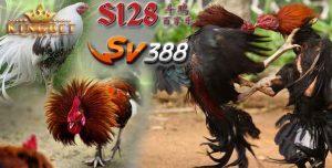 Server Sv388
